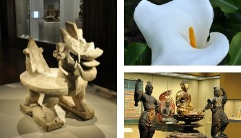 Free Museum Days in February
