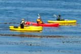 kayaking monterey