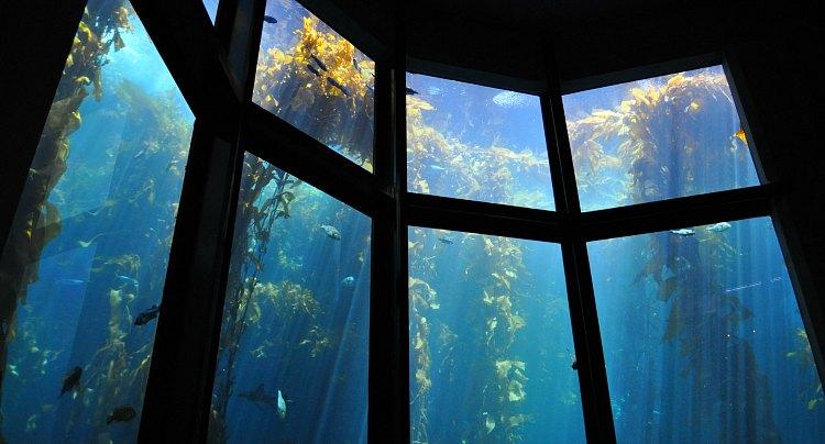Kelp Forest Aquarium