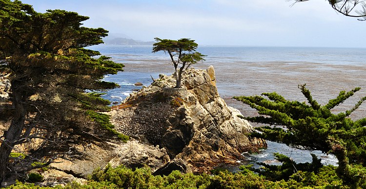 Lone Cypress in Pebble Beach