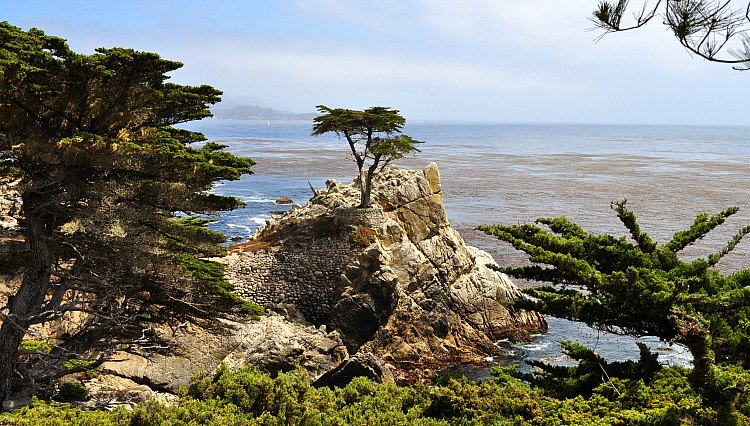 Lone Cypress on the Clear Day