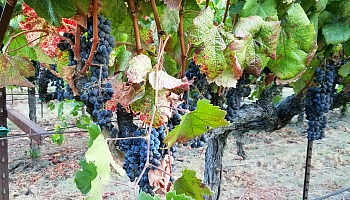 Mendocino Wine Tasting