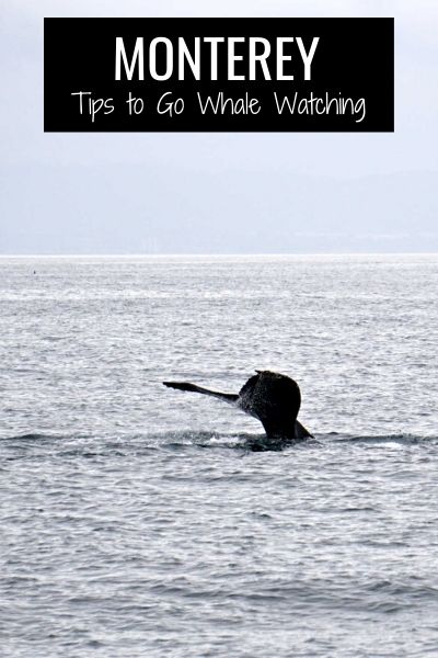 Tips to Go Whale Watching in the Monterey Bay