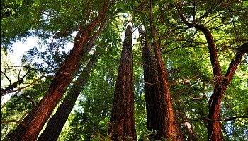 Muir Woods August Tours