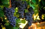 napa sonoma wine