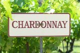 Chardonnay in Napa Valley