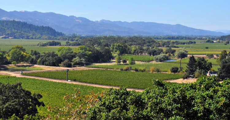 High above the valley vineyards in Napa.
