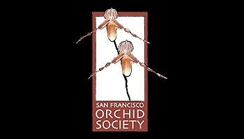 Pacific Orchid