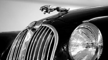 SF Auto Show