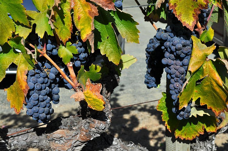 Sonoma County Wine Events in July