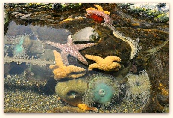 star fish sf aquarium