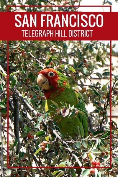 Telegraph Hill | San Francisco Neighborhoods | Parrots | Coit Tower