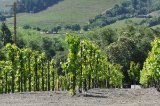 Wine Tours to Napa