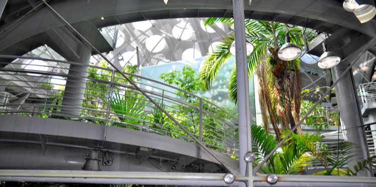 California Academy of Sciences Rainforest