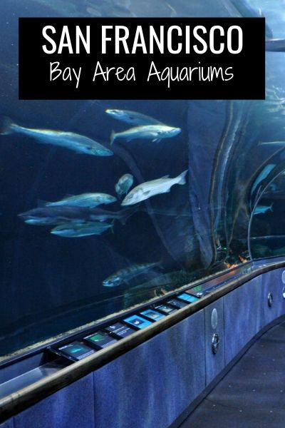 SF Bay Area Aquariums: My Favorites Near SF