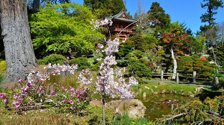 Japanese Tea Garden in the Spring