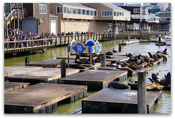 Sealions at Pier 39 from the yacht