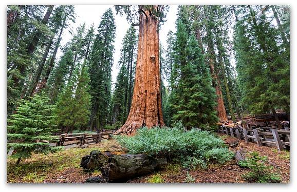 Sequoia Kings Canyon