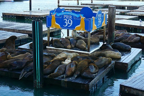 Sea lions on Pier 39, one of the many things to do in Fishermans Wharf