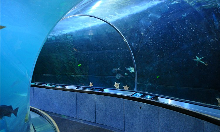 One of two tunnels at the Aquarium of the Bay