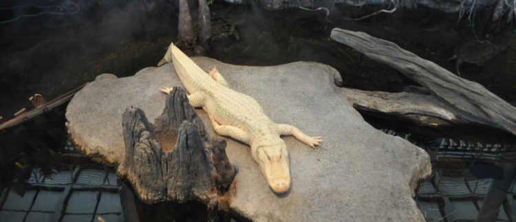 Claude at the California Academy of Sciences